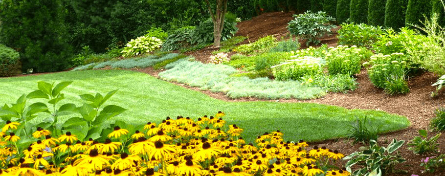 black diamond landscapes arlington ma lush and vibrant green lawn design with yellow flowers home landscaping design